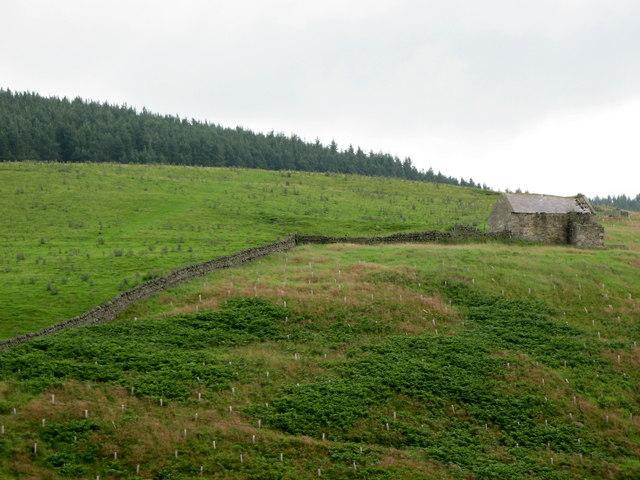 Ellers Hill