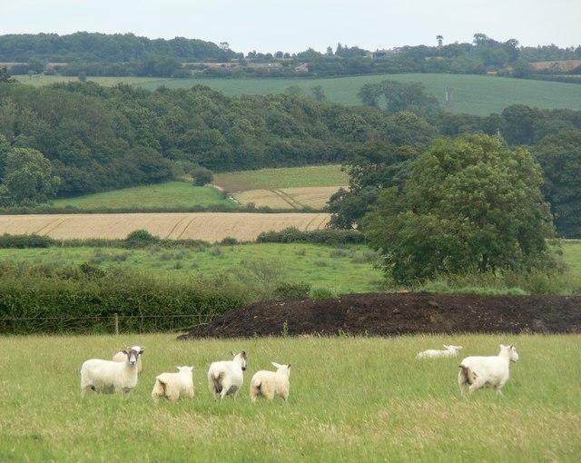 Field alongside Melton road