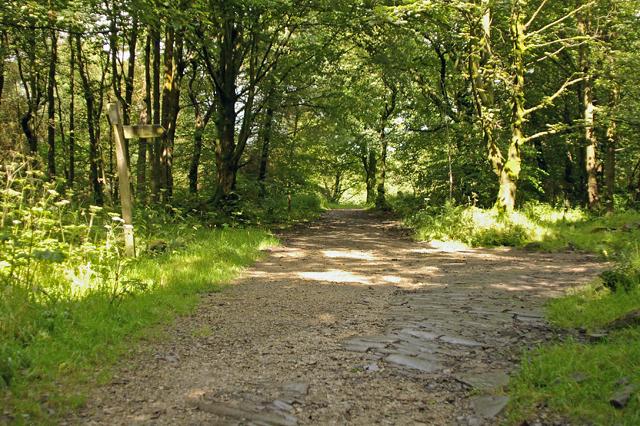 Tracks meet in Tockholes Plantation