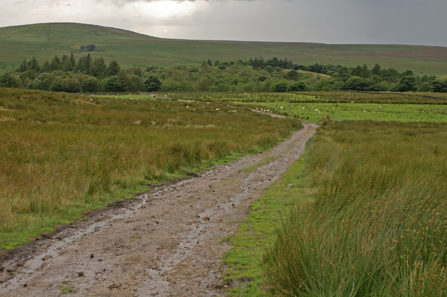 Track from Tockholes Plantation