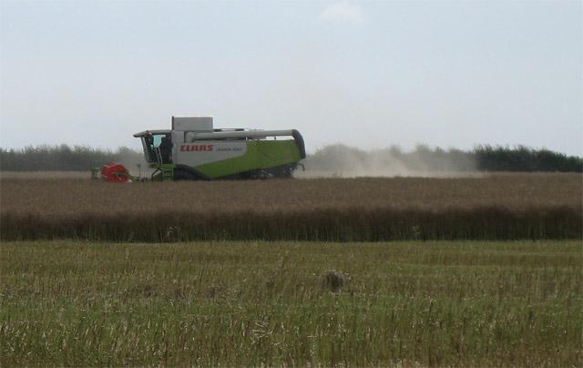 Combining oil seed rape near Bessingham