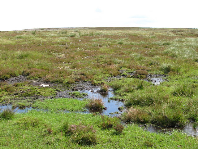 Spongy ground on Nookton Fell near Coppy Wreath