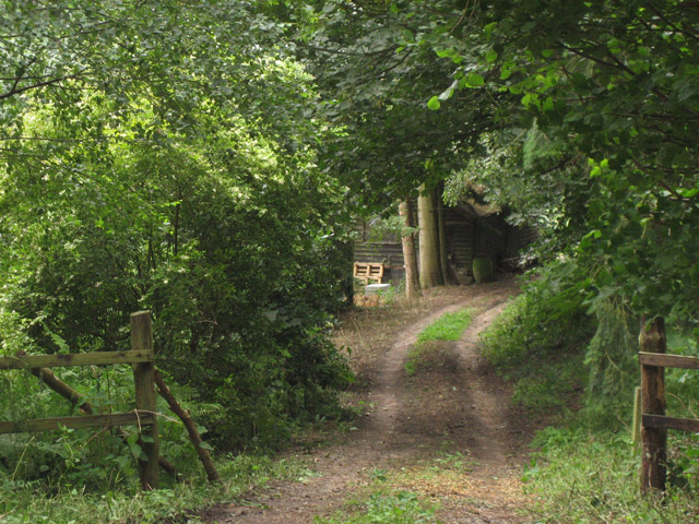 Track into woodland