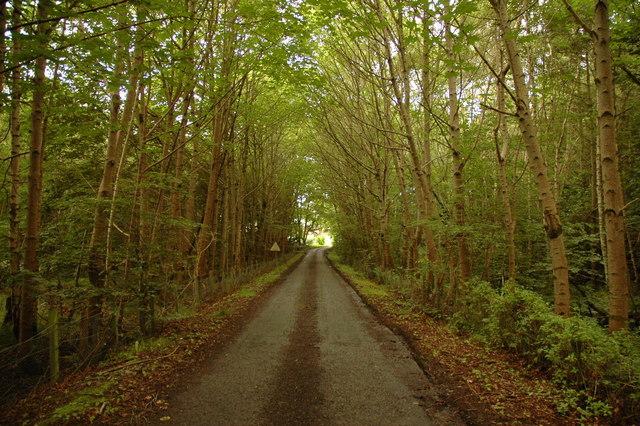 Road through trees near Arabella
