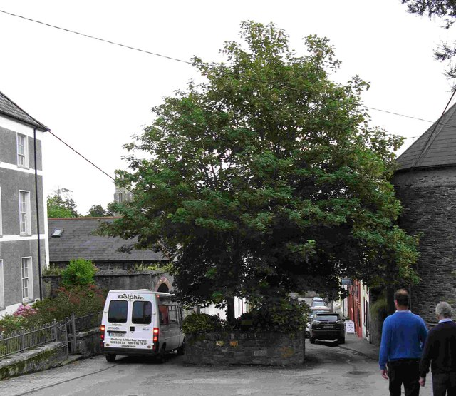 Castletownshend '2 Trees'