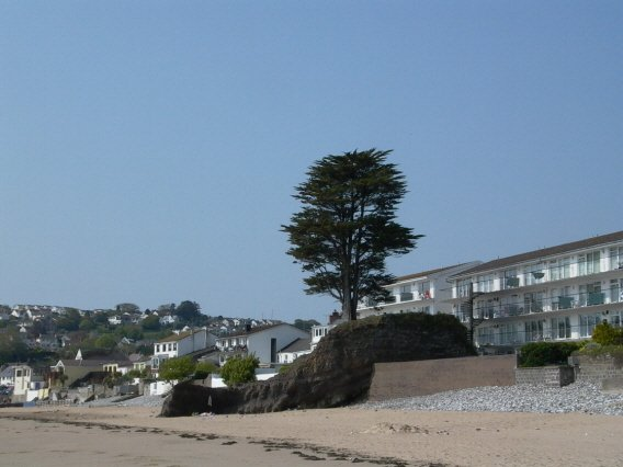 Tree on Saundersfoot beach