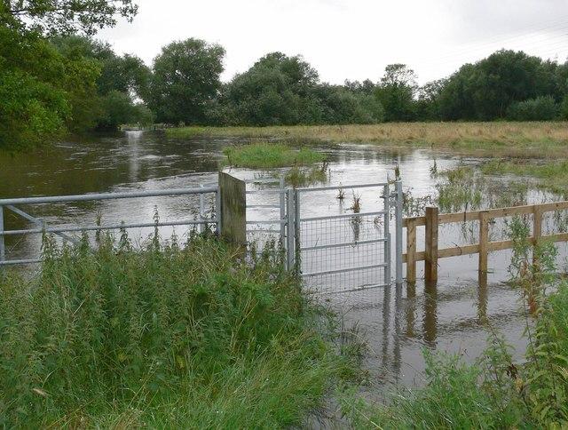 Flooded Spearwort Fields