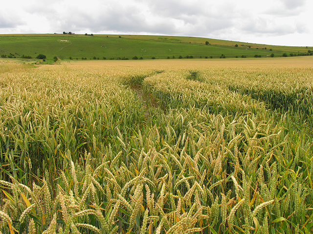 Farmland near Pewsey Hill