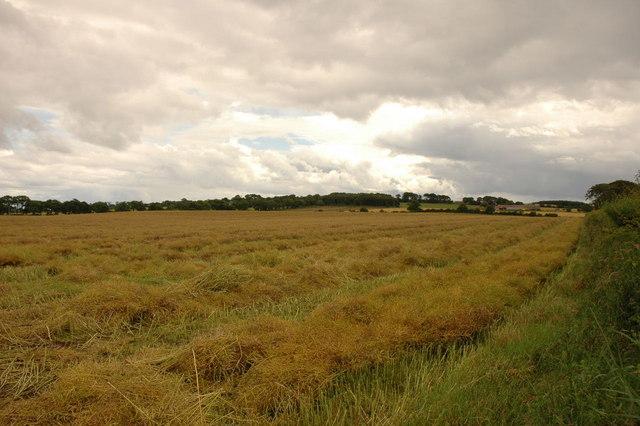 Fields by Cadboll Mount