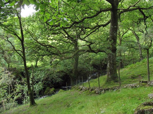 Afon Mynach from the Glan y Mynach path