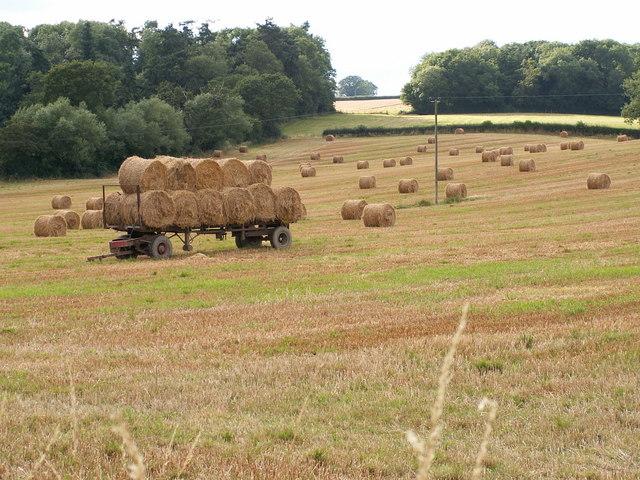 Fields of Nantcribba Farm