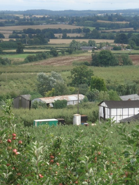 Apple orchards at Putley
