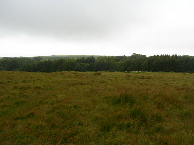 Woods at Corney