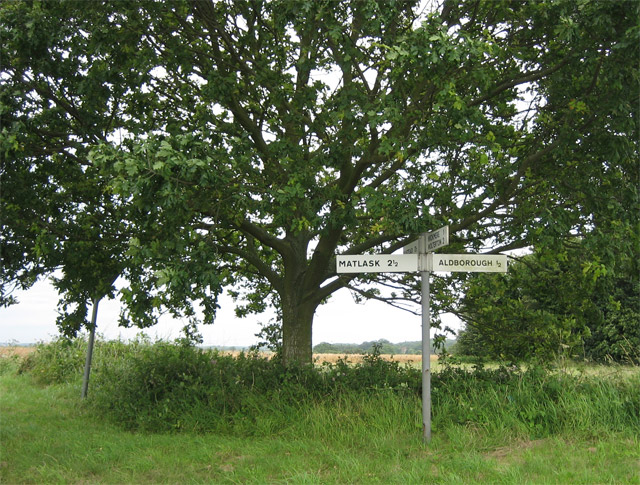 Under the spreading oak, a sparkling clean signpost