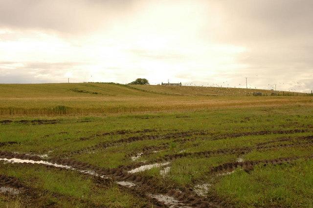Fields looking to Mulderg
