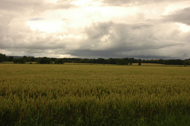 Fields near Fearn Station