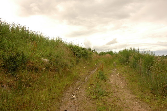 Overgrown Track