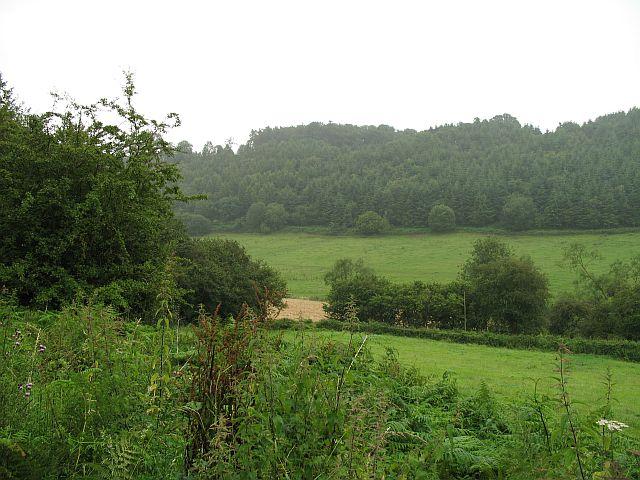 Chaff Wood