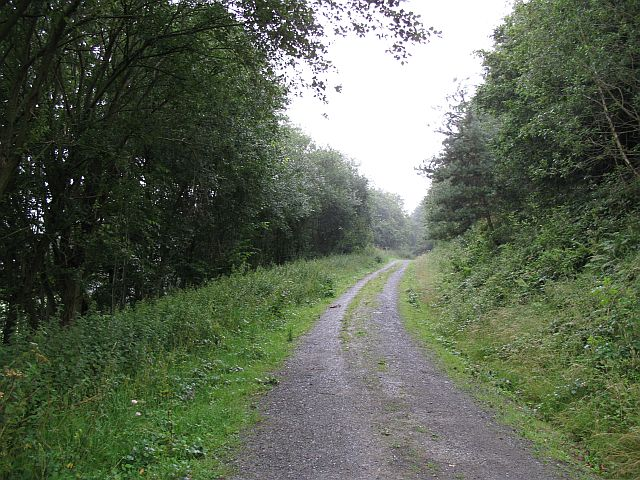 Forest road, Blackthorn Wood