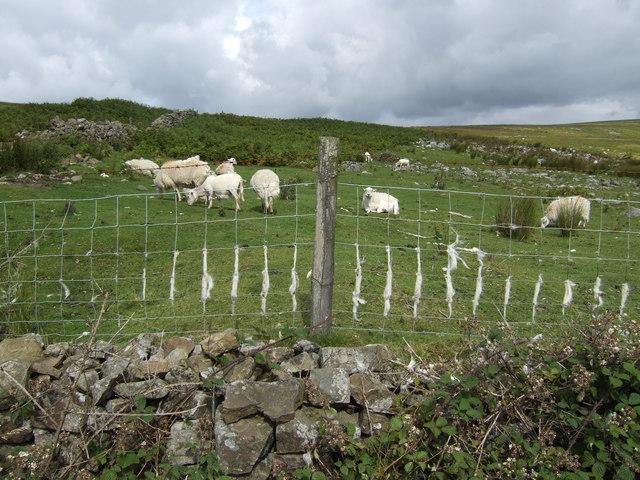 Hill pasture land