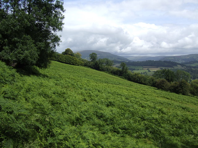 Field of bracken