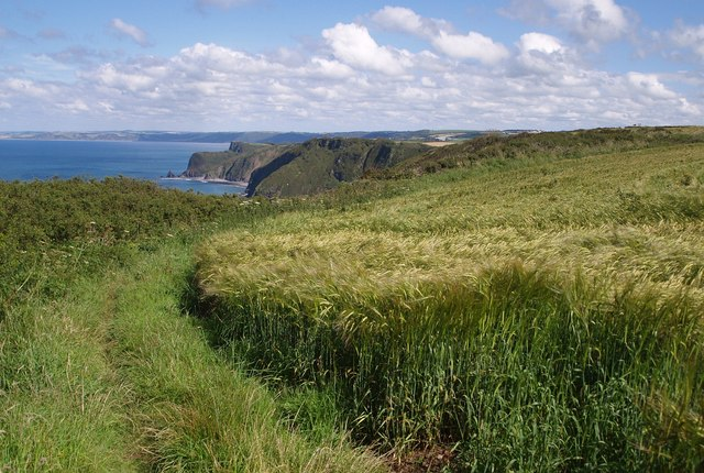 Coast path above Exmansworthy Cliff