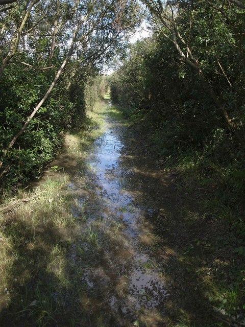 Waterlogged bridleway near Fattacott