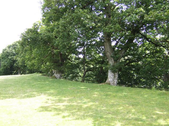 Tree line above Nant Cwm Llwch
