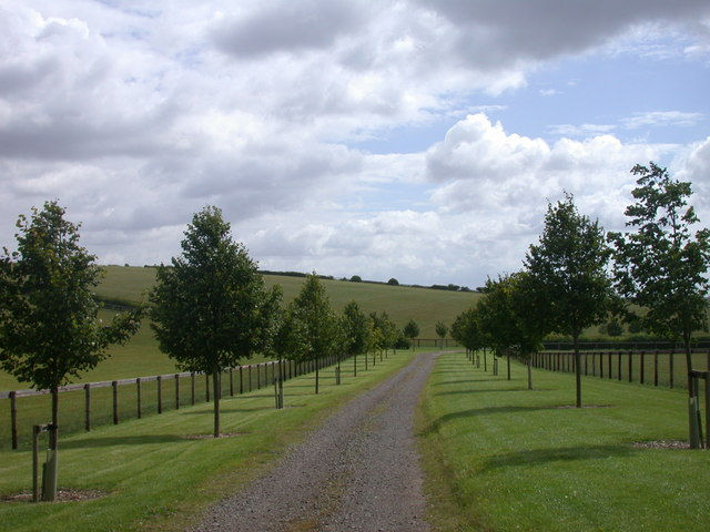 Avenue leading south from The Grange