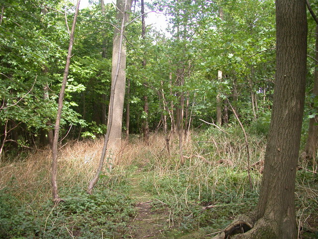 Public Footpath 26 enters Cooper Green woods