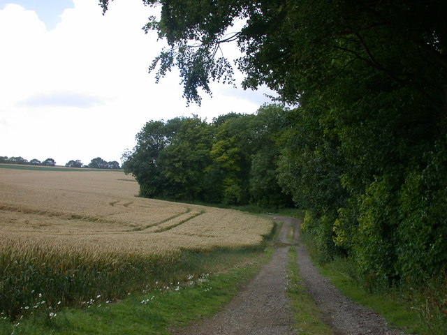 Track on the south side of Cooper Green woods