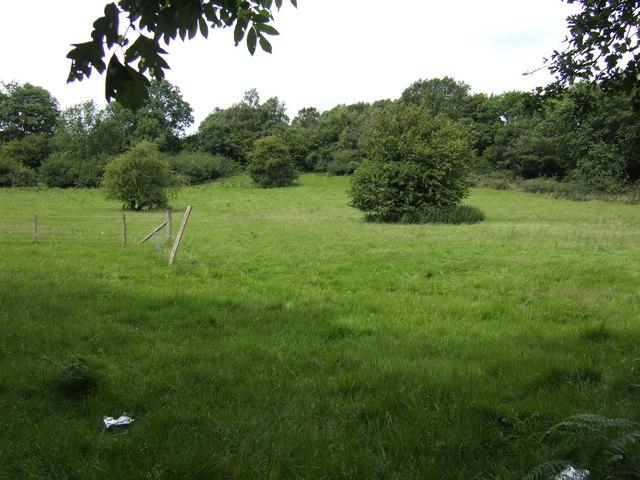 Scrubby pasture near Cwmclyn