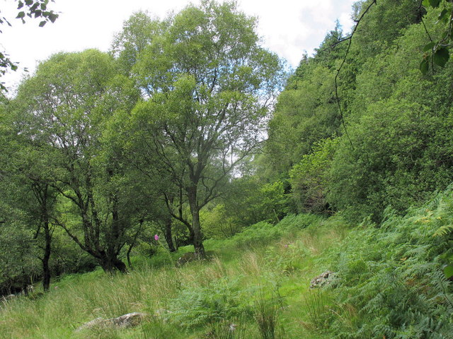 Wooded shoulder above the incised Afon Mynach