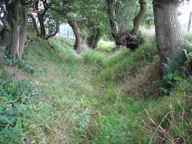 A Bridle Path