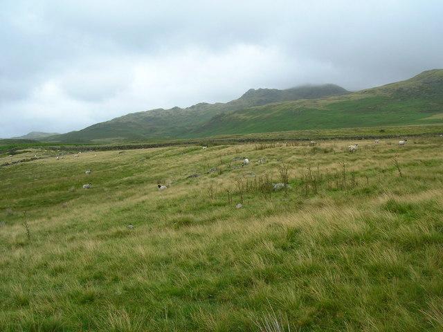 Looking towards Birkby Fell