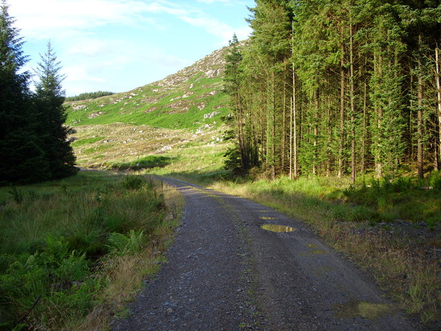 Unmapped forest road