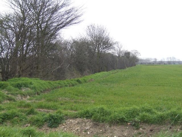 View towards Barton Bendish Fen