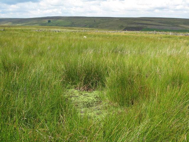 Very spongy ground on Heatheryburn Moor