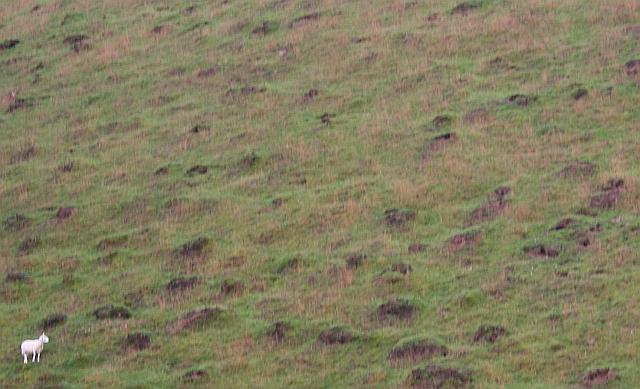 Ant Hills on British Camp