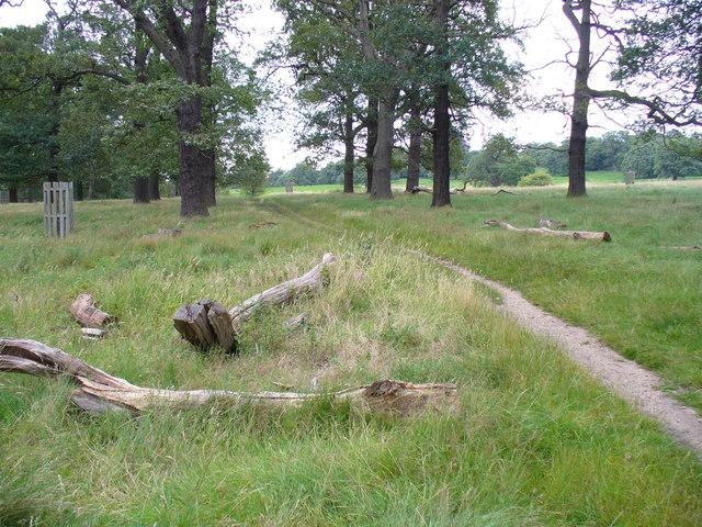 Footpath in Richmond Park