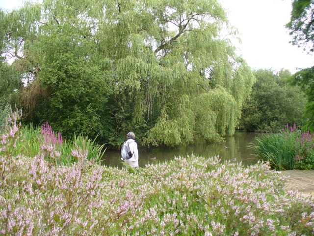 Peg's Pond, Isabella Plantation