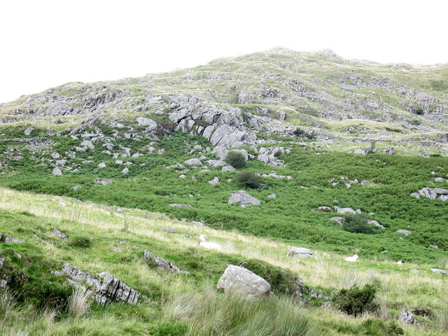 Rock outcrops north of Ffridd yr Hengwrt