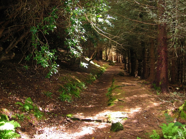 Woodland path at Dunvegan