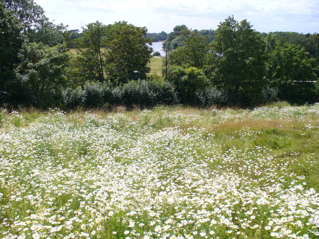 Wildflower Meadow, Petersham