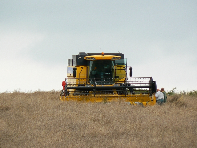 Harvesting of oilseed rape crop, near Winterbourne Bassett