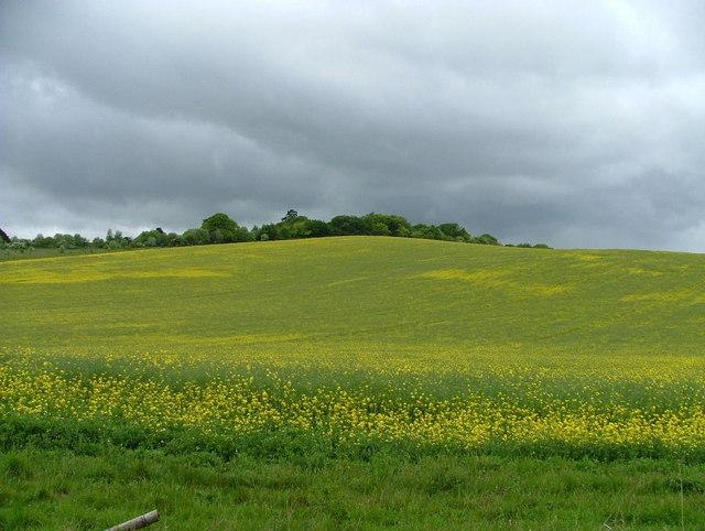 Swyncombe Downs from the Ridgeway Path