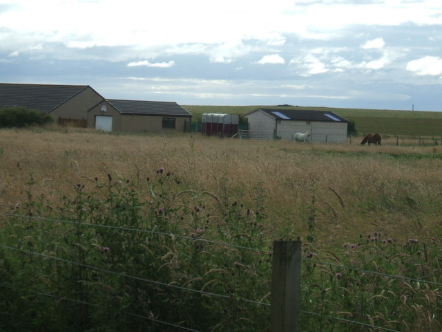 Horse Paddock at South Dumpston
