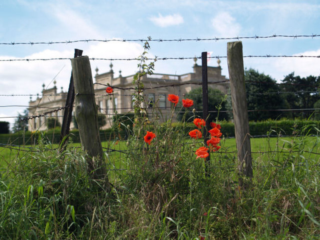 Barbed wire and poppies.