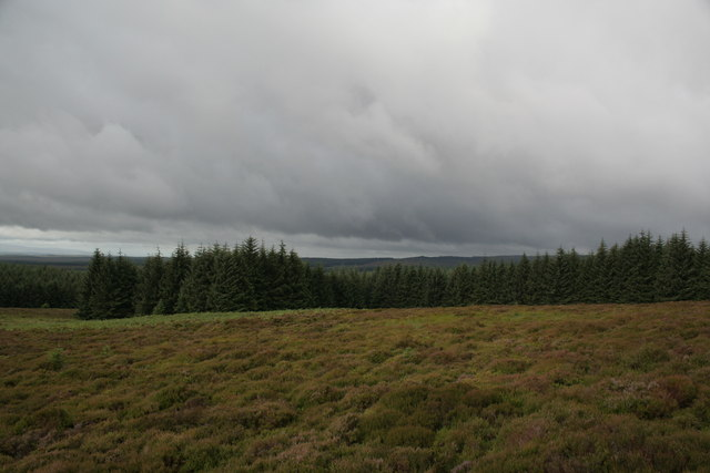 Forest at Bolts Law