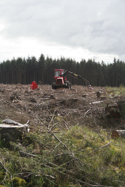 Forestry Operations at White Hill